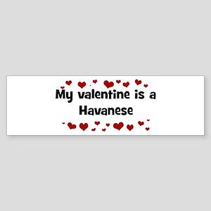 Havanese valentine Bumper Sticker