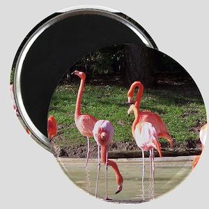 Flamingo's to Go