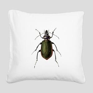 Calosoma Scrutator Beetle Square Canvas Pillow