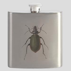 Calosoma Scrutator Beetle Flask