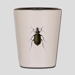 Calosoma Scrutator Beetle Shot Glass