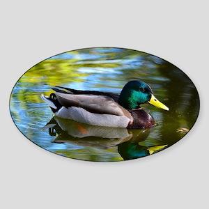 Mallard reflections Sticker (Oval)