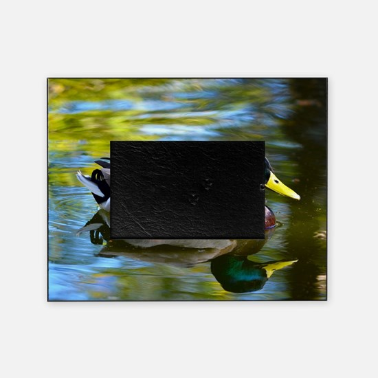 Mallard reflections Picture Frame