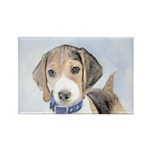 Beagle Rectangle Magnet (100 pack)