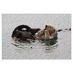 California Sea Otter Posters