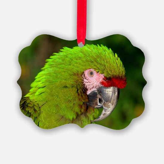 Military macaw Ornament