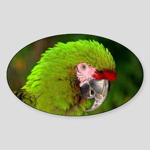 Military macaw Sticker (Oval)