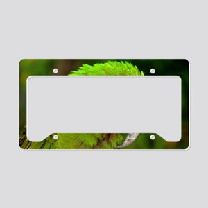 Military macaw License Plate Holder