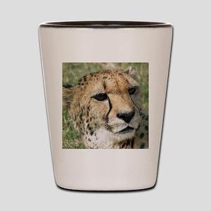 Cheetah006 Shot Glass