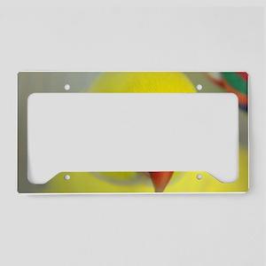 Indian Ringneck Parakeet License Plate Holder