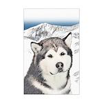 Alaskan Malamute Mini Poster Print