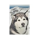 Alaskan Malamute Rectangle Magnet (100 pack)