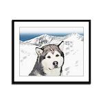 Alaskan Malamute Framed Panel Print