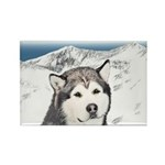 Alaskan Malamute Rectangle Magnet (10 pack)