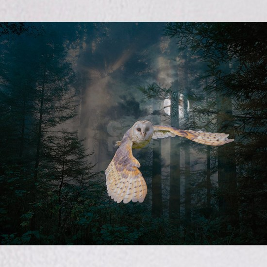 Owl at Midnight