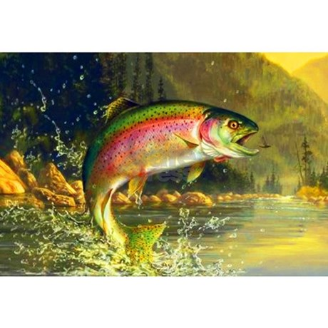 decorative rainbow cover pillow throw sham trout fish listing il