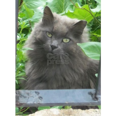 Long Haired Russian Blue Cat Puzzle By Kittytease