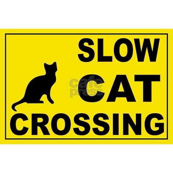 cat-crossing