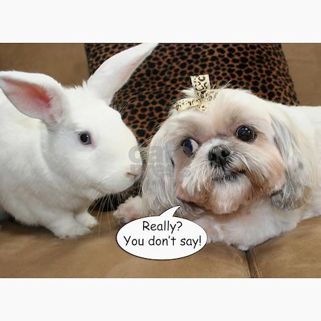 Bunny Shih Tzu Birthday Greeting Cards Pk Of 10 By Alisongiese