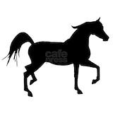 Arabian horse Wall Decals